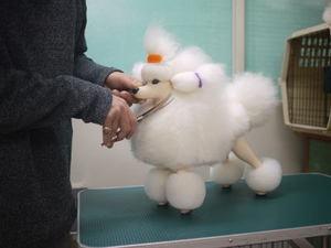 Puppy24