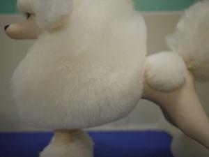 Puppy41
