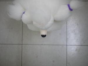 Puppy46