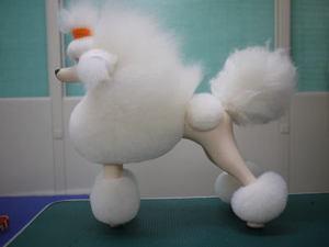 Puppy50