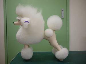 Puppy53
