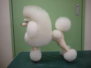 Puppy55