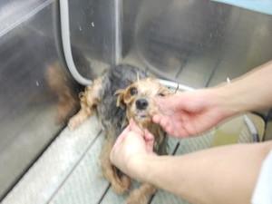 Shampoo3