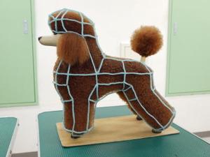 Puppy64