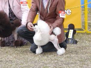 Dogshowgunma2