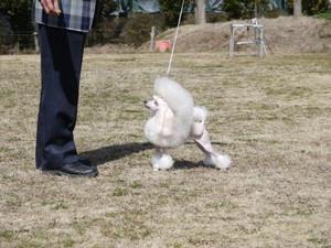 Dogshow7