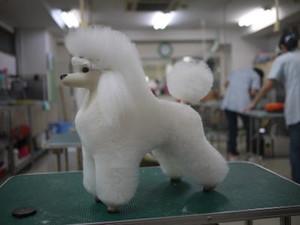 Puppy67