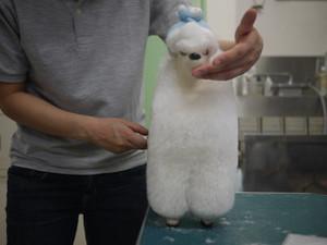 Puppy68