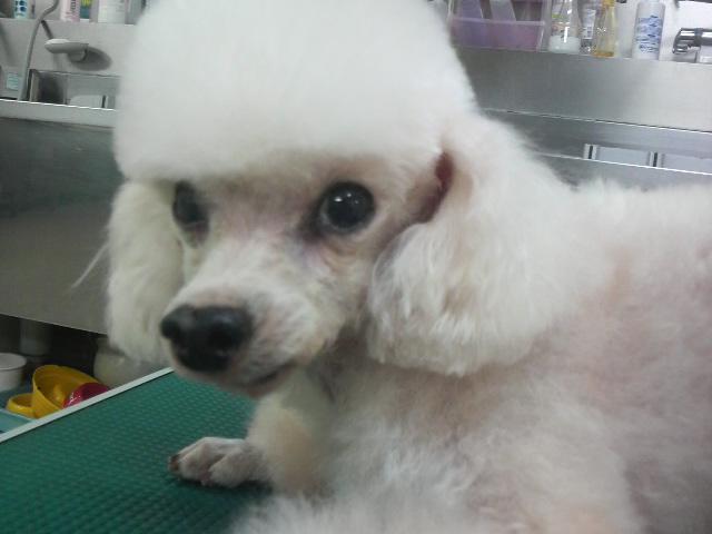 VGS Dog's 勇馬くん☆