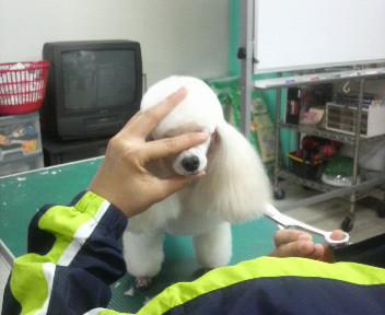 見守るメープルちゃん★