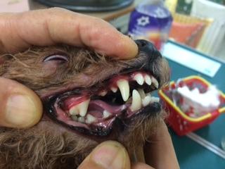ゼオカル歯磨きしました!